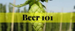 Beer & Brewing 101