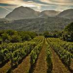 Great Italian Wines