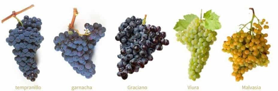 rioja grapes e1502153876168