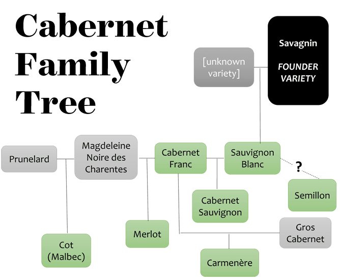cabernet family tree