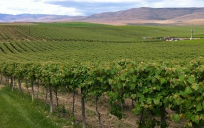 Best Kept Wine Secrets: The Columbia Valley Wine Regions