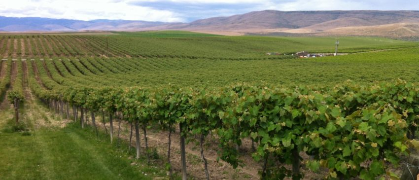 Columbia Valley Wine