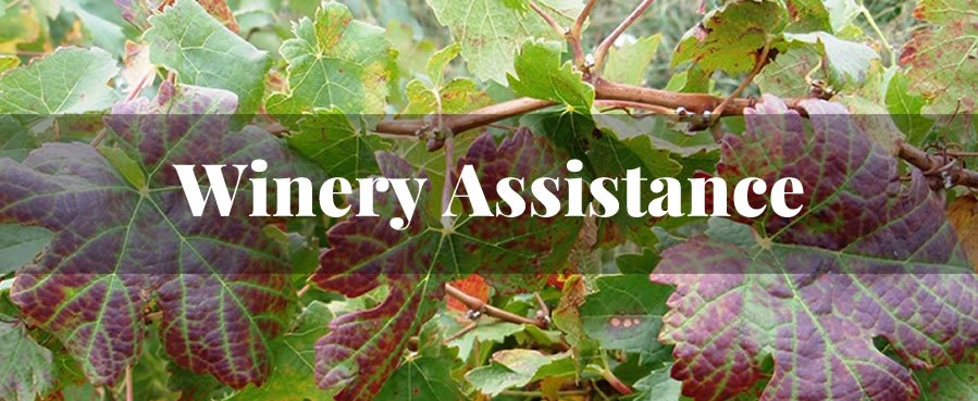 Winery Assistance