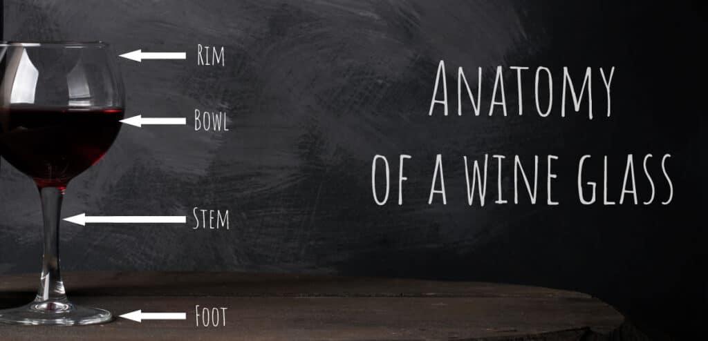 anatomy of wine glasses