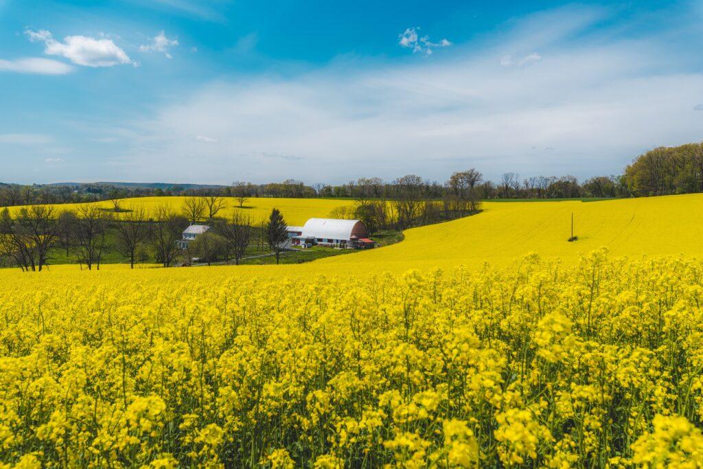 fields-of-beauty-4AVXT8V