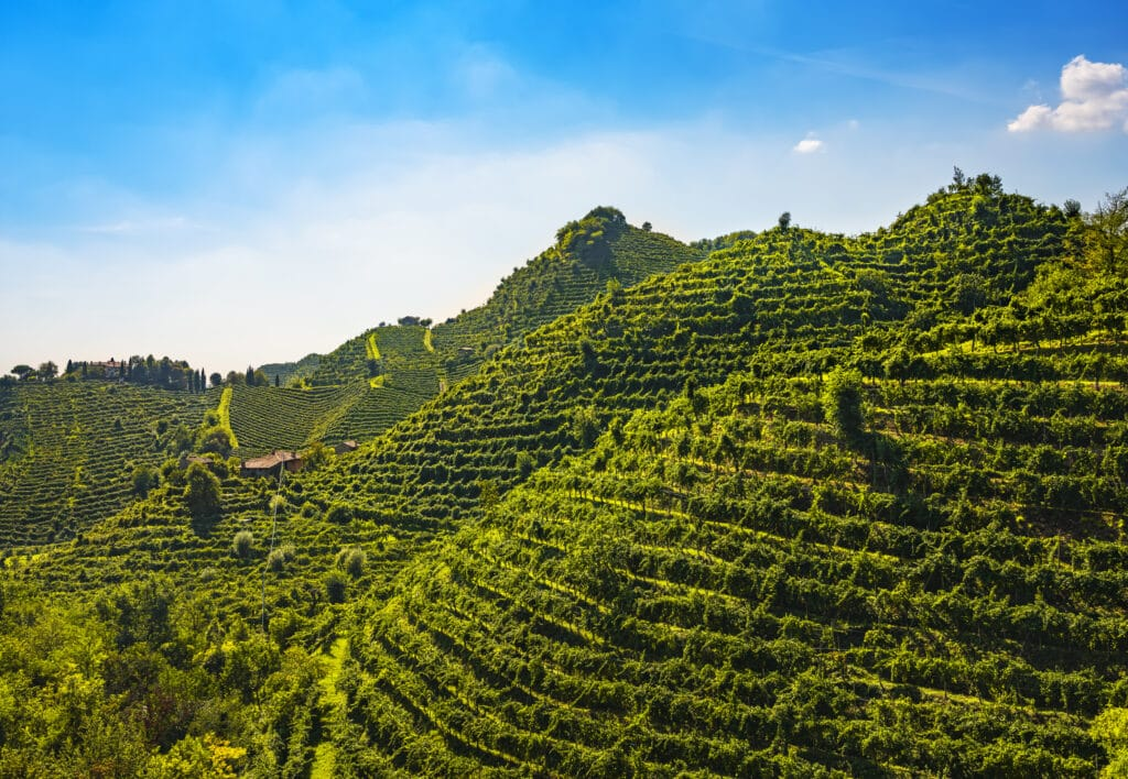 Prosecco Hills, vineyards at sunset. Unesco Site. Farra di Soligo. Veneto, Italy, Europe.