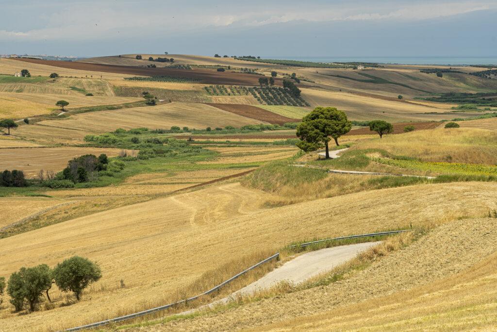 Rural landscape near Serracapriola, Foggia, Apulia, Southern Italy, at summer