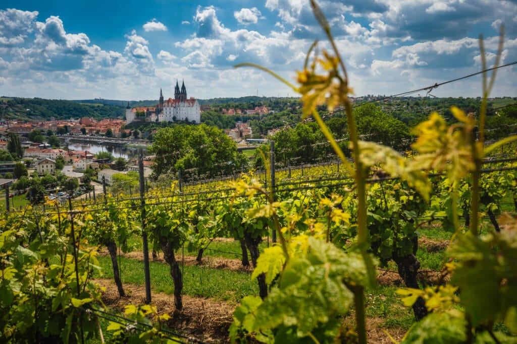 View of Meissen castle on Elbe river, Saxony, Germany. Vineyards on sunny day.