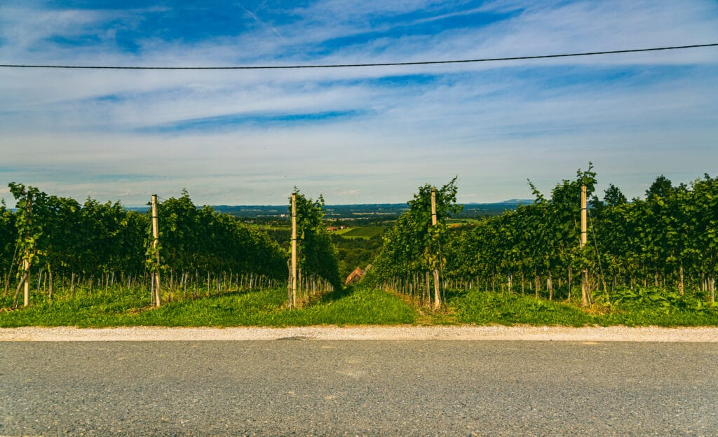 Vineyard landscape at South Styrian Wine Road in Austria. Famous Tuscany like tourist spot for wine lovers.
