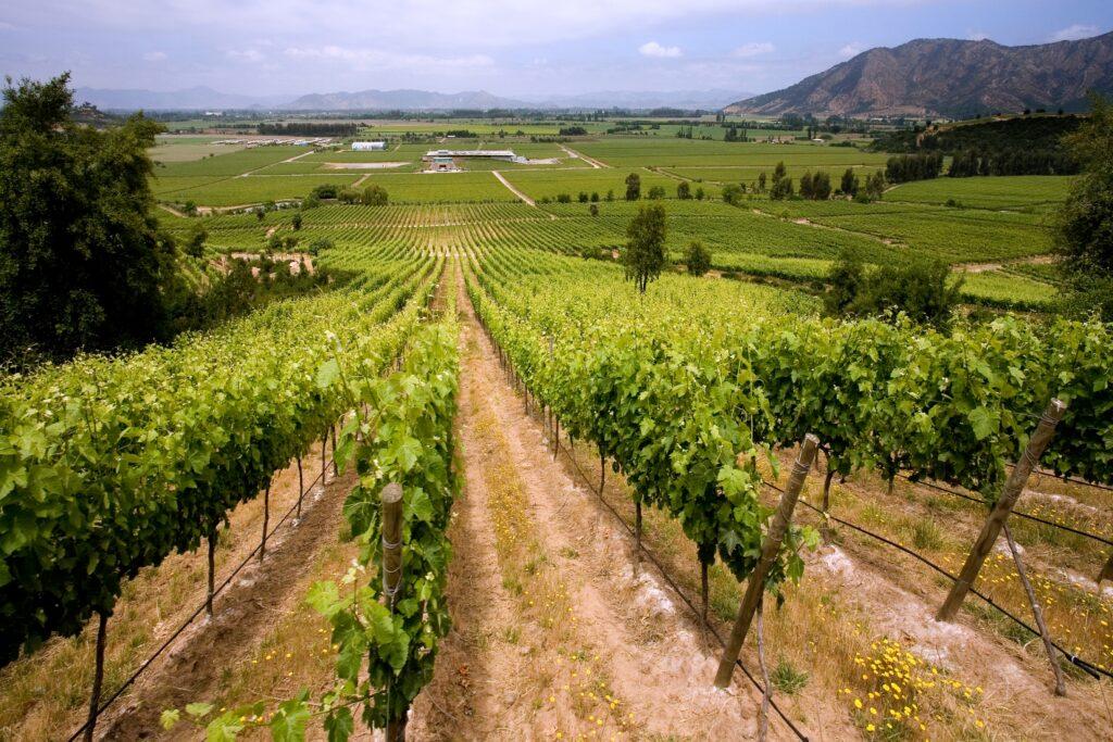 Vineyards producing Chilean wine near Santa Cruz in the Colchagua Valley in central Chile, South America