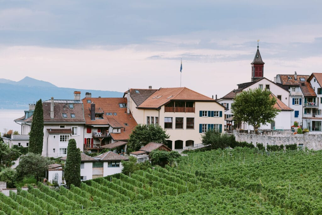 vineyards with mountains and lake views. Vineyards terraces with mountain view in Vevey, Switzerland.